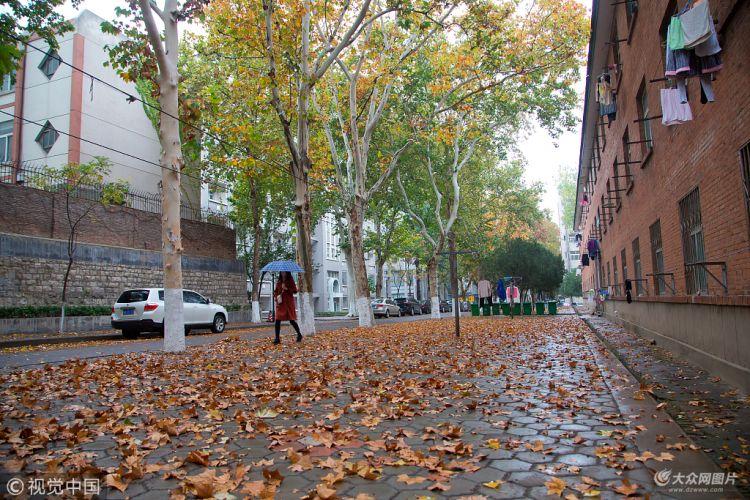 济南:秋雨过后校园内满地落叶 秋意十足