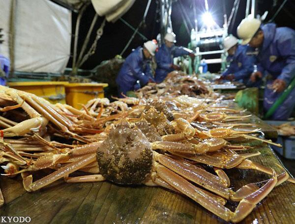 又想甩锅?日本今冬螃蟹价格贵,原因居然和中国有关