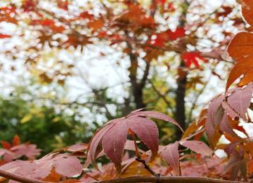 秋雨打秋叶落 枣庄新城街头秋意浓