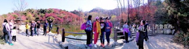 层林尽染其实不是枫树功劳,济南南山红叶多是黄栌树