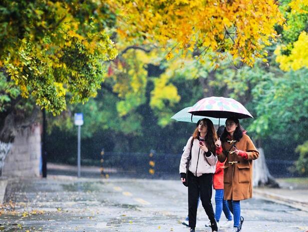 秋意浓!雨中八大关美成这样
