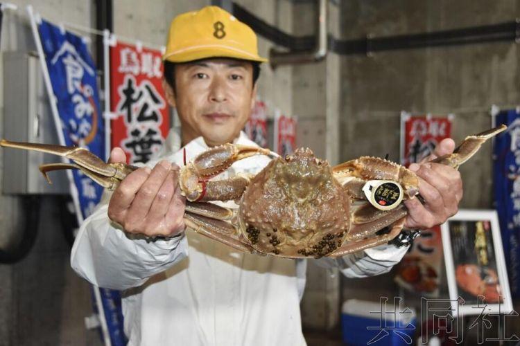 """日本鸟取""""五辉星""""楚蟹拍出天价,一只12.2万元"""