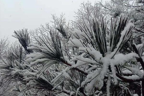 37秒|下雪喽!临沂沂蒙山景区迎来今冬首场降雪
