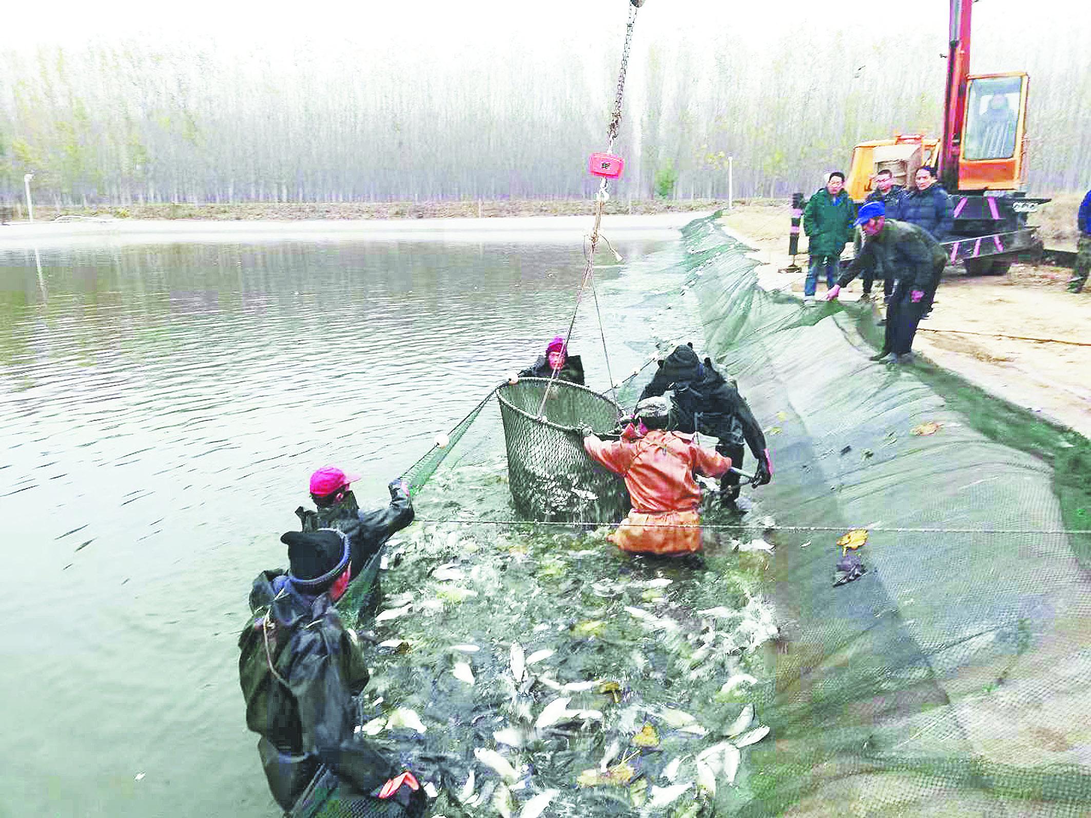 """920万尾""""净水""""鱼类投放淄博多处水系"""