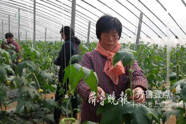 菏泽投资434.2亿建现代农业产业园
