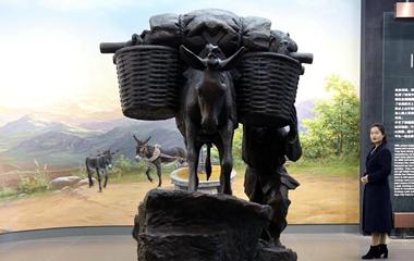 有点意思!聊城的这家毛驴博物馆奇趣无穷