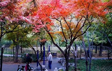 组图丨秋去冬来 泉城公园更加绚丽多彩