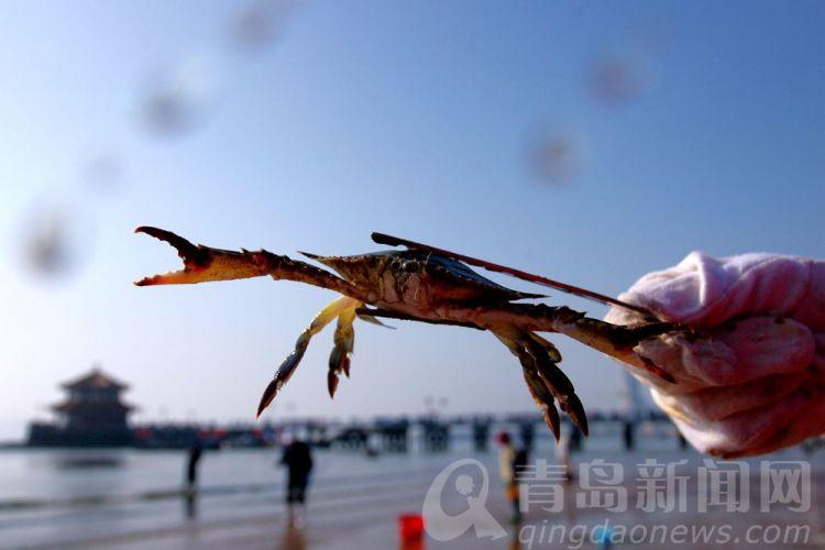 高清:初冬栈桥赶海走起 挖蛤蜊搂蟹子钓蛏子喽