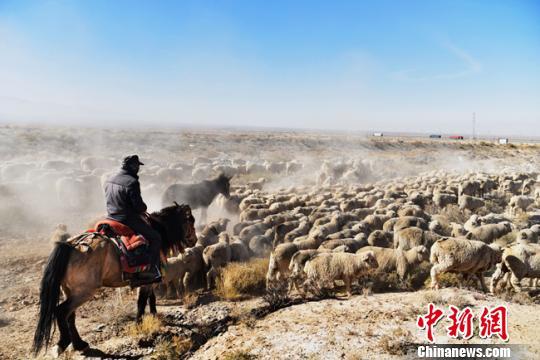 甘肃肃南新路径护草原生态 牧民徒步千里异地借牧
