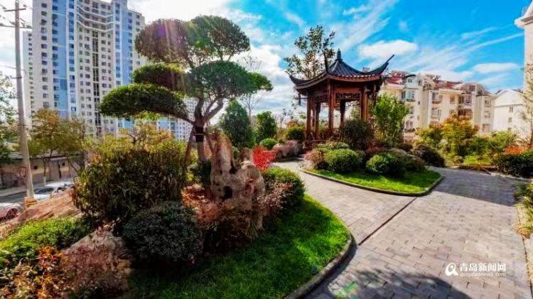 图:四季常绿三季有花 如此昌邑路口袋公园你喜欢吗