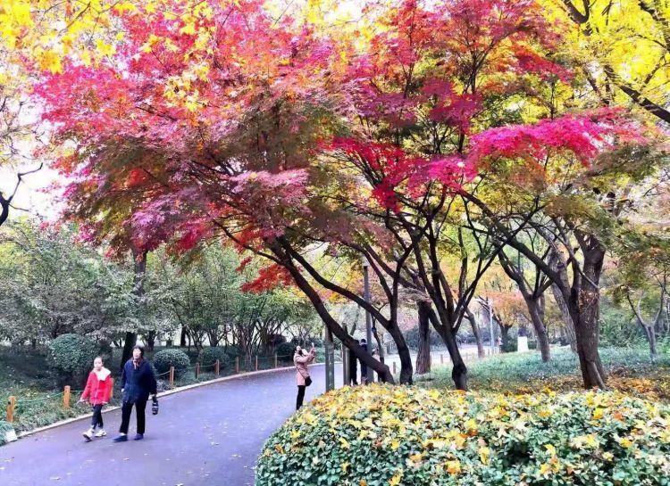 组图 | 叠翠流金 层林尽染 TA是美爆了的泉城公园