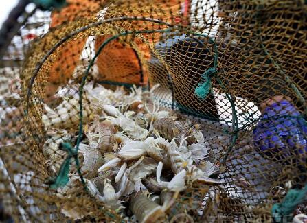 高清:鱼虾蟹大量上岸 初冬去仰口码头淘实惠海货