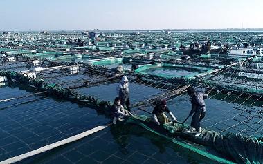 航拍丨荣成20万亩海参喜获丰收