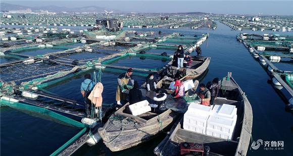 航拍丨山东荣成20万亩海参喜获丰收