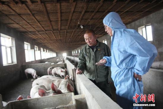 农业农村部:饲喂餐厨剩余物是非洲猪瘟原因之一