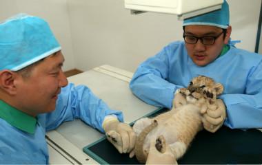 年底该体检啦~欢迎观看动物爆笑体检现场秀!