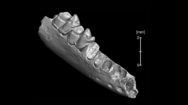 北美出土最古老灵长目祖先化石