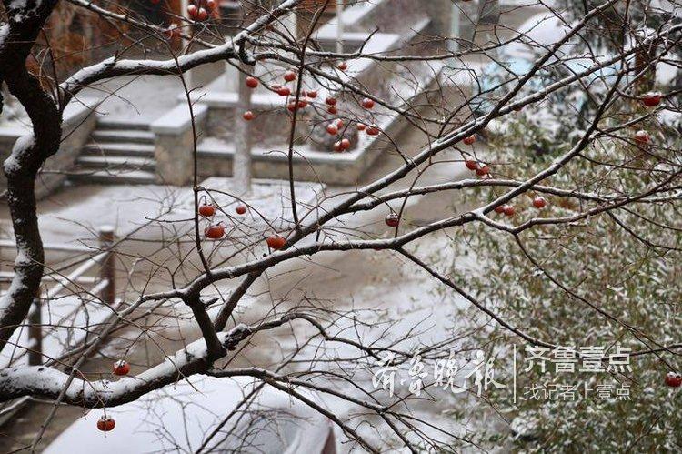 今冬头场雪,济南南部山区变成仙境