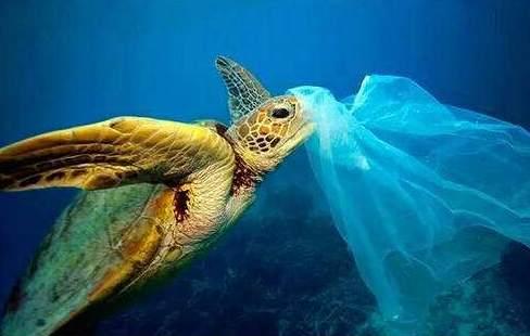 英国研究人员在全球所有品种的海龟体内发现塑料