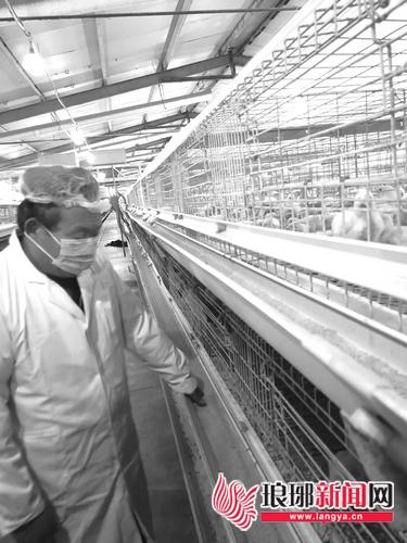 """鸡苗价格猛涨 临沂的""""吃货""""们今冬吃鸡要多花钱"""
