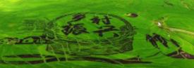 """淄博敲定乡村振兴""""路线图""""和""""时间表"""""""