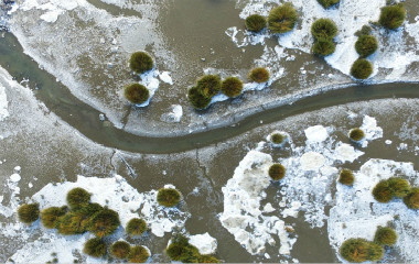 青岛胶州湾现大范围海冰 暂未对养殖业造成影响