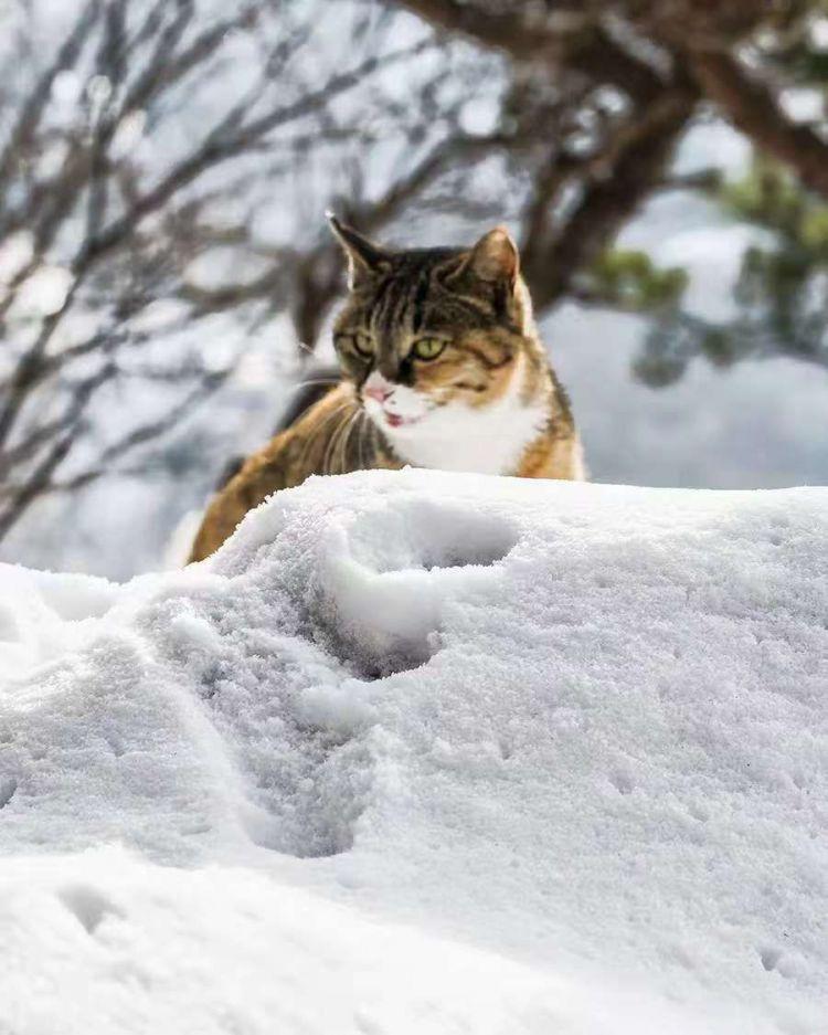 懒猫快起床!冷啊…崂山巨峰喵族冒雪上班记