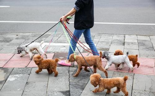 淄博明年拟立法规范城市养犬行为