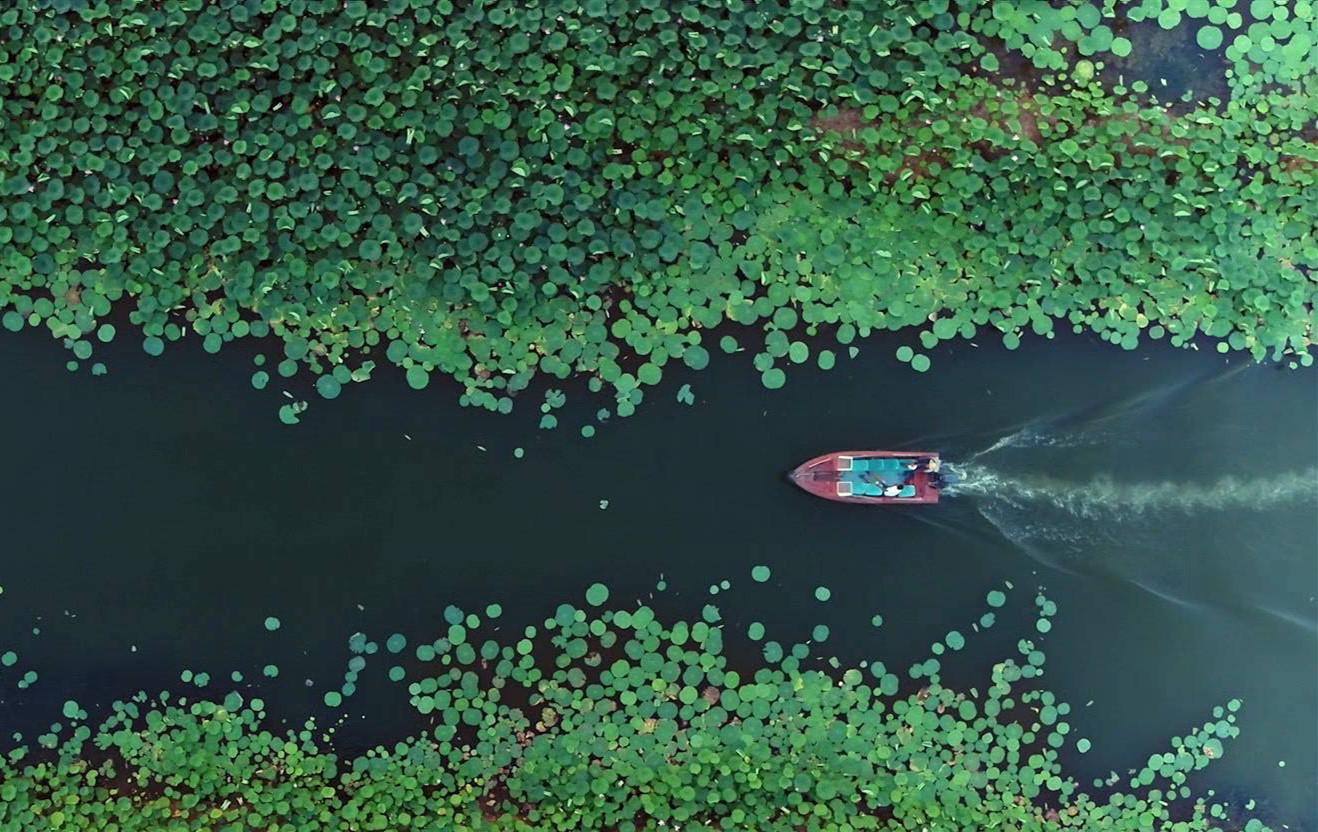 儒风凝聚大湖秀美 牡丹之都换新颜