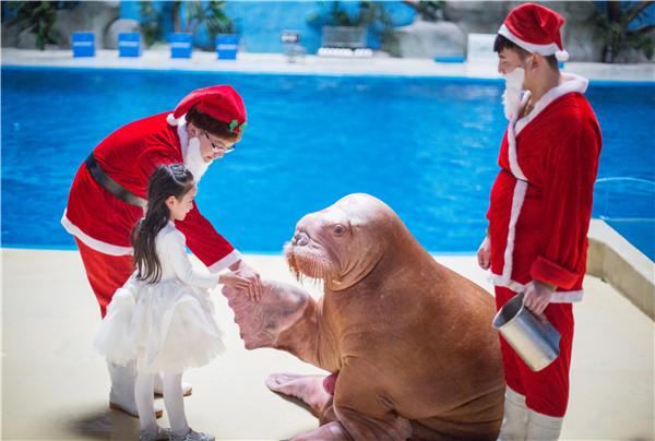 惊喜6-圣诞老人与海象