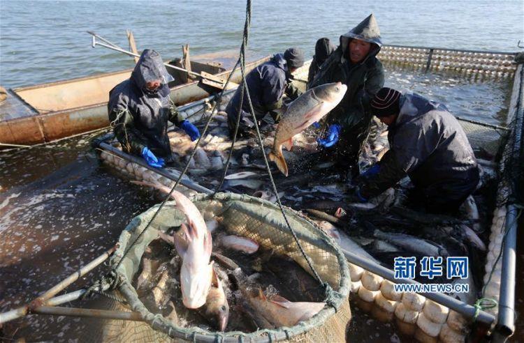临沂沂南:鱼跃人欢冬捕忙