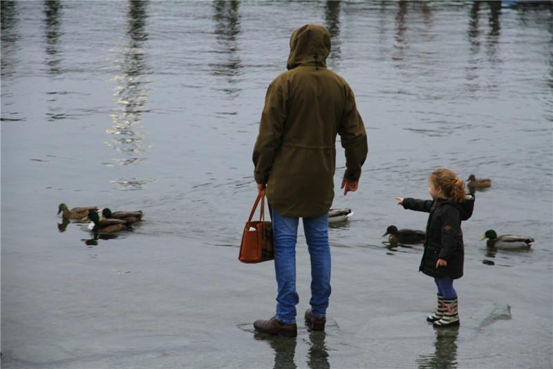 """44、""""爸爸:看那,有好多鸭子"""""""