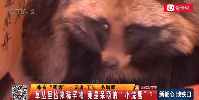 """市民草丛里捡来稀罕物 竟是呆萌""""小浣熊""""?(图)"""