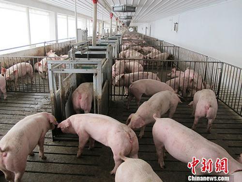 广东惠州市发生非洲猪瘟疫情:发病11头 死亡11头