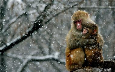 冬日严寒 给彼此一个温暖的爱的抱抱