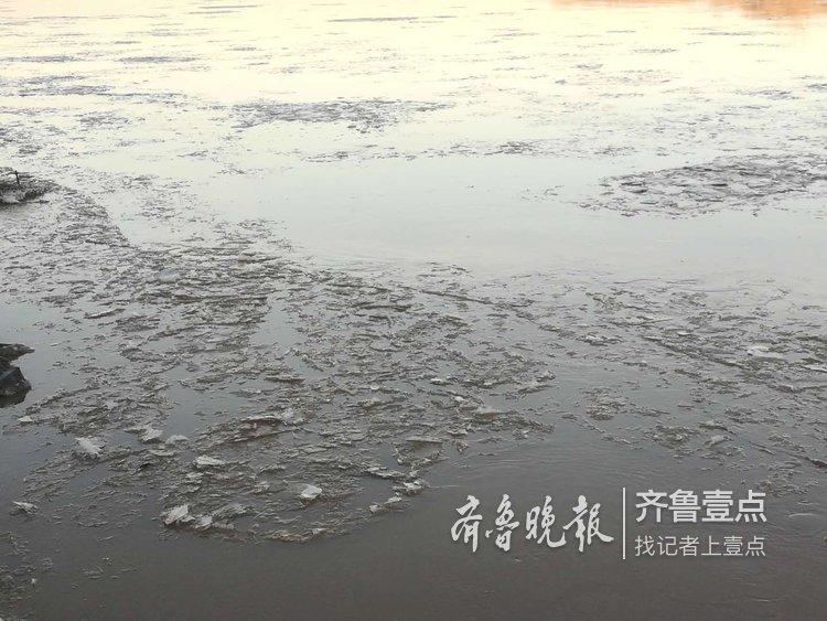 黄河济南段全线流凌,冰厚1-3.5厘米,最大冰块50平米