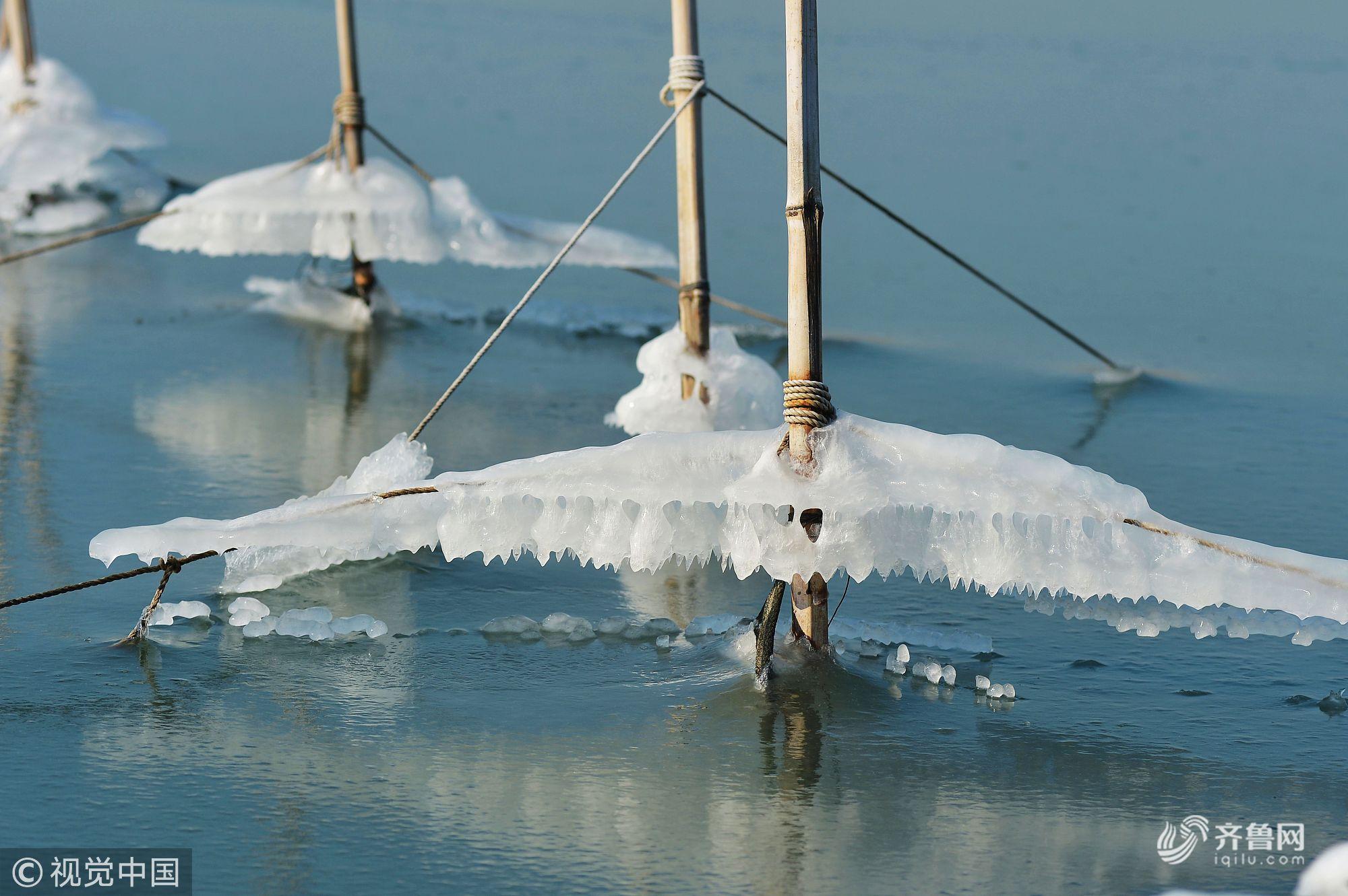 山东青岛:寒潮持续 多日出现海冰冻住渔船 对出海作业渔船构成影响