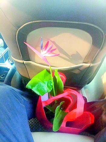 """奇葩事!济南市民买绿植竟是塑料花,店家曾说""""会开花"""""""