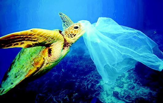 """可降解塑料真能解决""""白色污染""""吗?"""