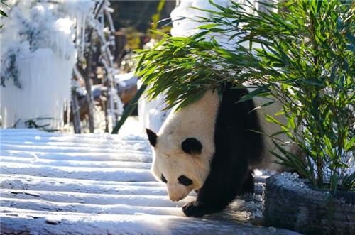 """济南野生动物世界举办""""首届南非暖冬狂欢节"""" 特推出198元特惠年票"""