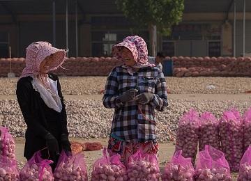 金乡大蒜成为济宁市代表性农副特产