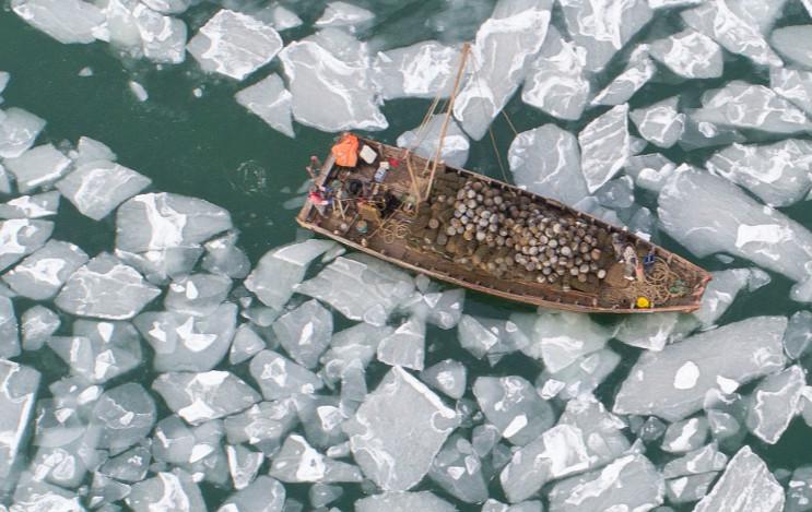组图:烟台莱州湾海冰初现 最大厚度约5厘米