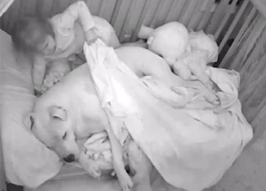 """小女孩与90斤大型犬同睡一床引争议 父亲称狗是""""保镖""""(图)"""