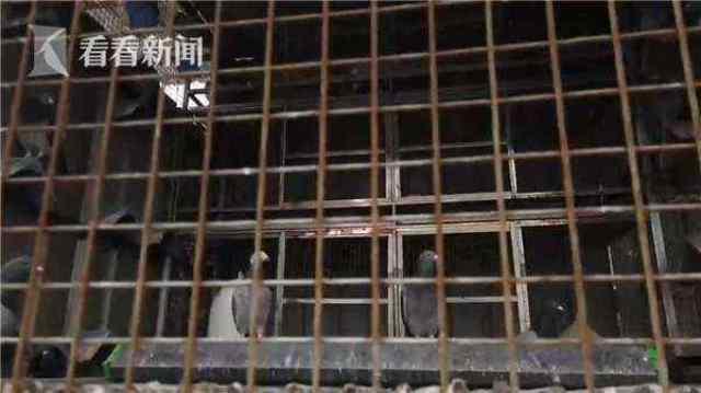 男子为报复房东偷走40只信鸽涮火锅 吃完后悔了