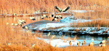 济南人朋友圈被它们刷屏:200多只大明湖夜鹭很恋家