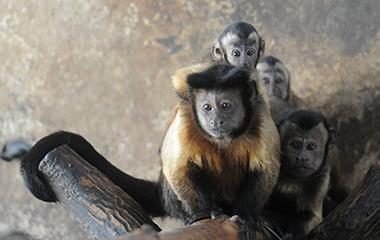 高萌组图丨济南动物园新生动物齐亮相