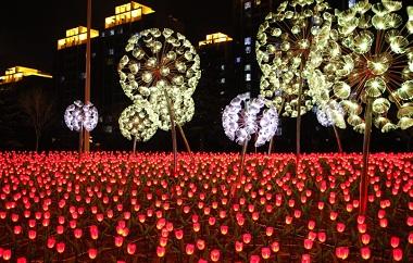"""威海:数万朵LED""""郁金香""""点亮城市"""