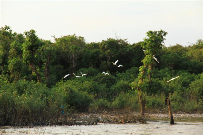 90、树丛中飞起的白鹭