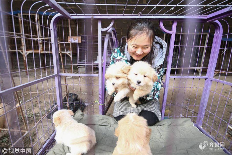 临沂90后女孩为600多只流浪动物搭建爱的家园