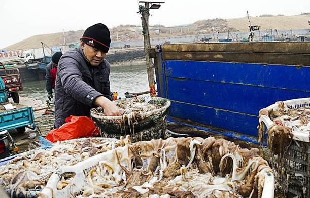 新春首航,青岛渔船满载而归!